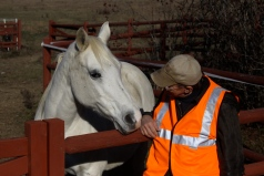 A Country Doctor and his horse, Thanksgiving 2012